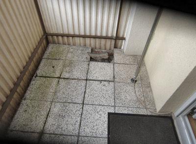 Sanierungen-Balkon-Erlachweiher-05